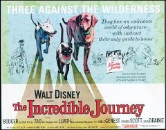 INCREDIBLE JOURNEY Walt Disney 1963 9 card set